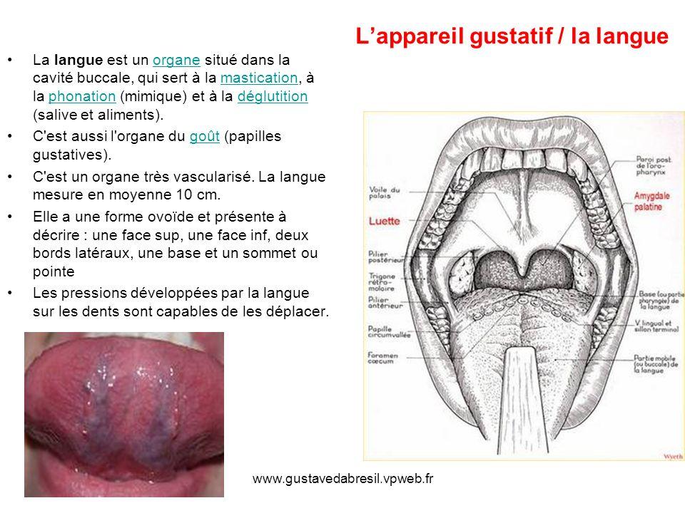 L'appareil gustatif / la langue