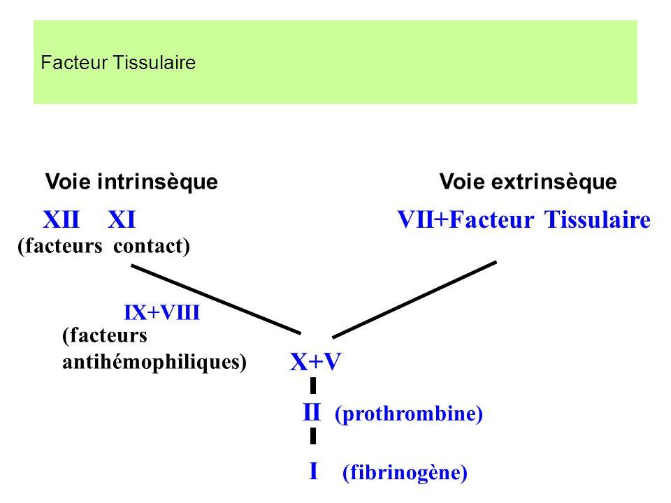 XII XI VII+Facteur Tissulaire