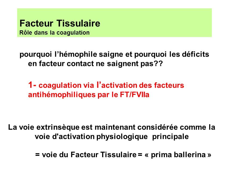 Facteur Tissulaire Rôle dans la coagulation