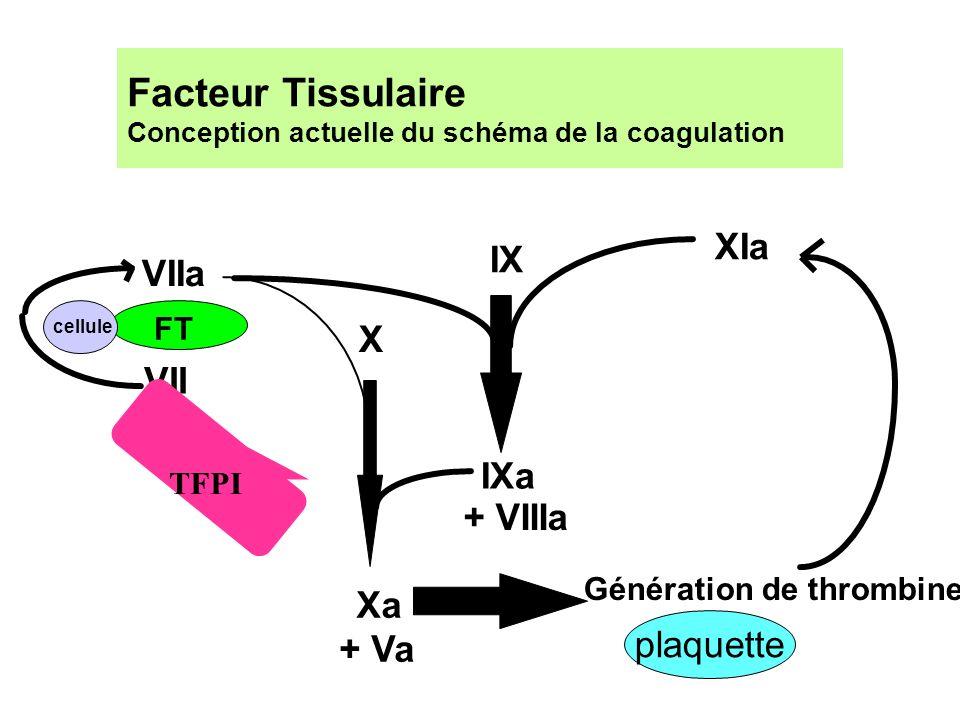 Facteur Tissulaire Conception actuelle du schéma de la coagulation