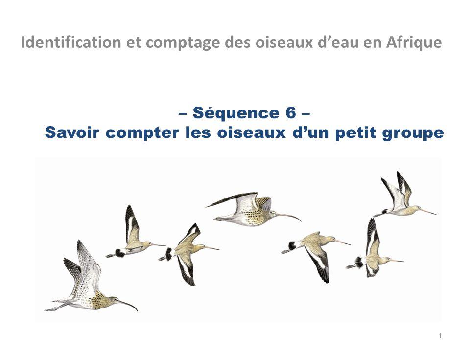 – Séquence 6 – Savoir compter les oiseaux d'un petit groupe