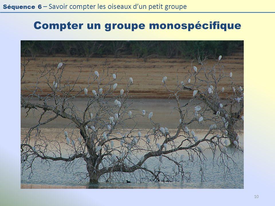 Compter un groupe monospécifique