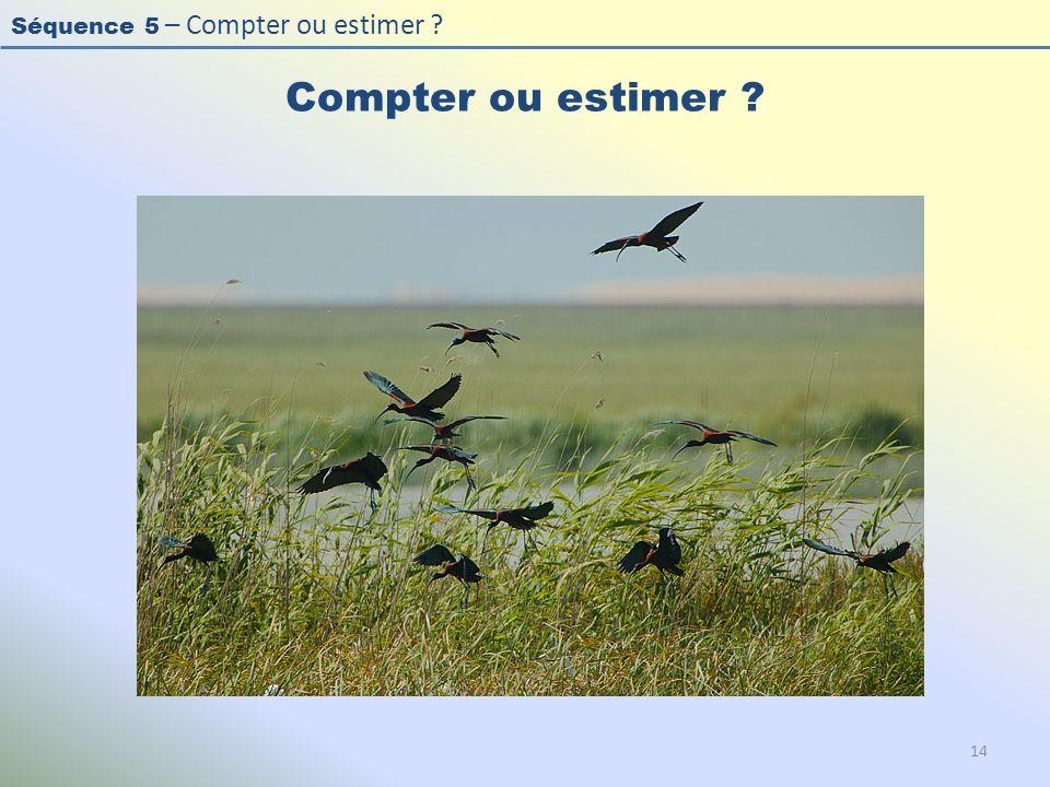 Compter ou estimer Photo : Ibis falcinelle - Glossy Ibis - Plegadis falcinellus.