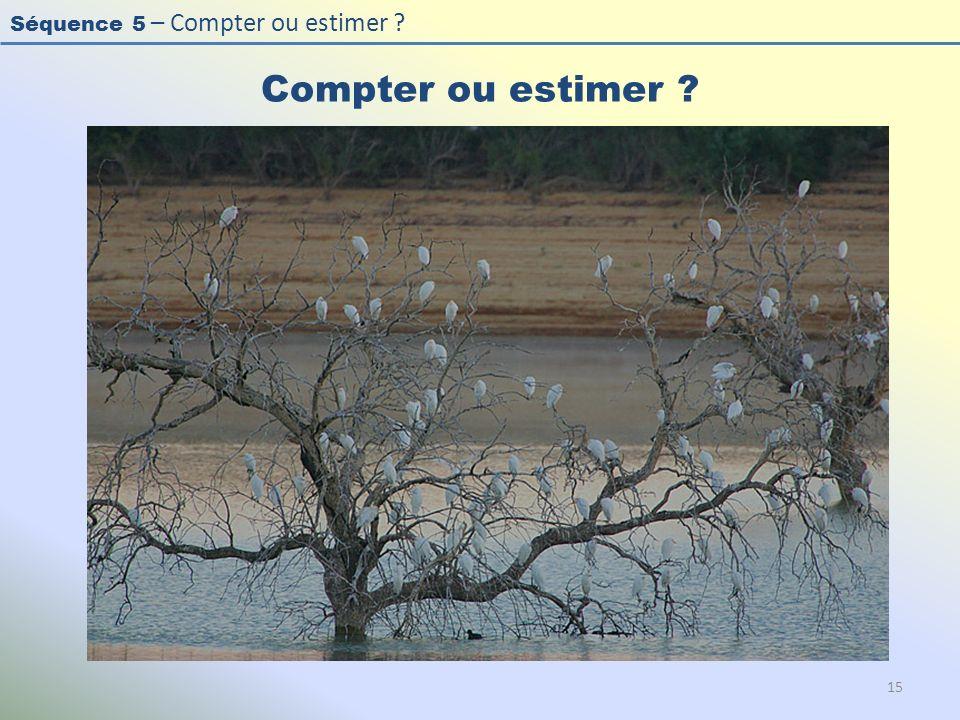 Compter ou estimer Photo : Héron garde-bœuf - Cattle Egret - Bubulcus ibis.