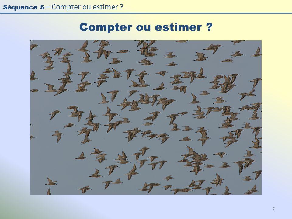 Compter ou estimer Photo : Bécasseau cocorli - Curlew Sandpiper - Calidris ferruginea. L'effectif est important (>50), les oiseaux sont en vol.