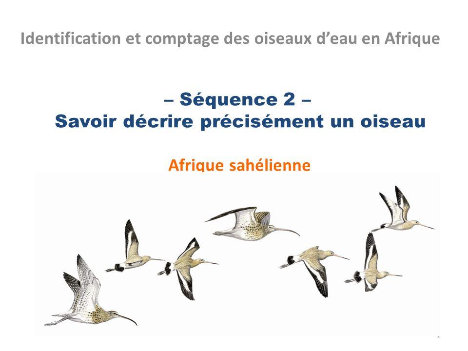 – Séquence 2 – Savoir décrire précisément un oiseau Afrique sahélienne
