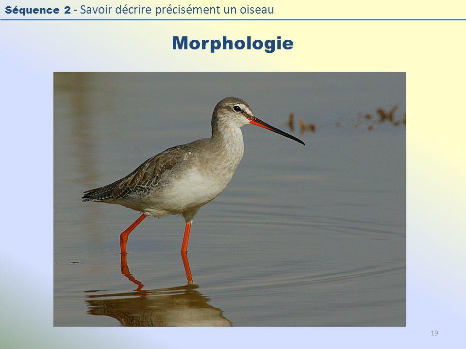 Morphologie Photo : Chevalier arlequin - Spotted Redshank -Tringa erythropus. Exercice en salle : « Décrire la morphologie d'un oiseau »