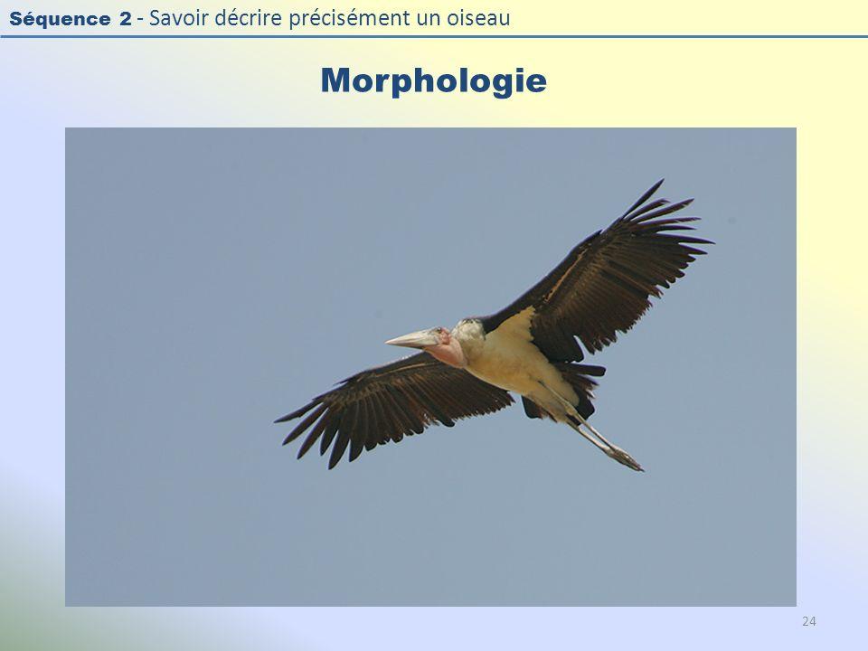 Morphologie Photo : Marabout d Afrique - Marabou Stork - Leptoptilos crumeniferus. Exercice en salle : « Décrire la morphologie d'un oiseau »