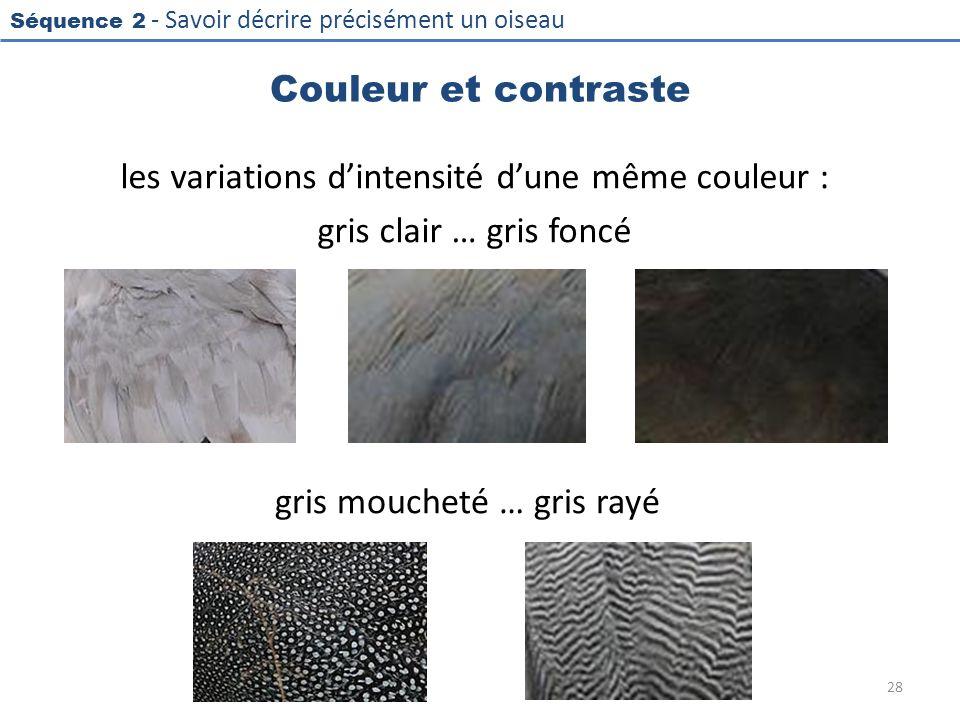 gris moucheté … gris rayé
