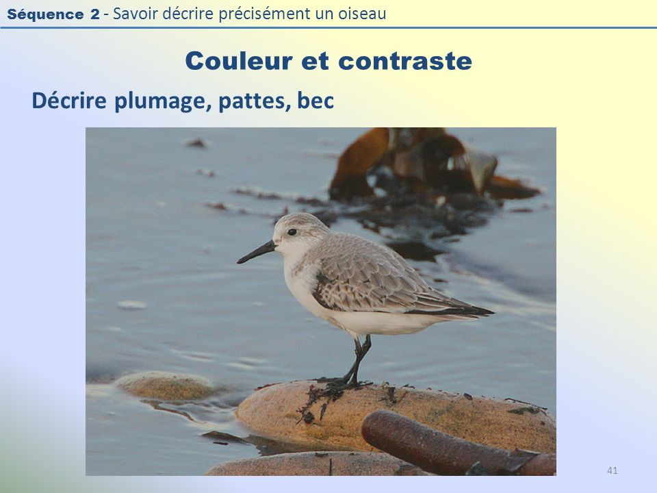 Décrire plumage, pattes, bec