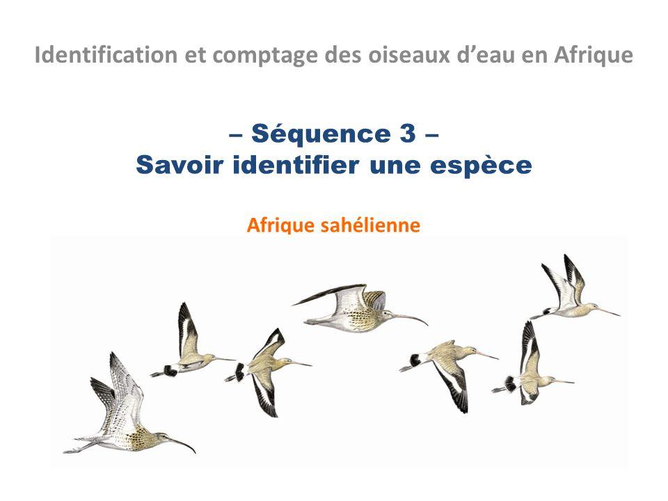 – Séquence 3 – Savoir identifier une espèce Afrique sahélienne