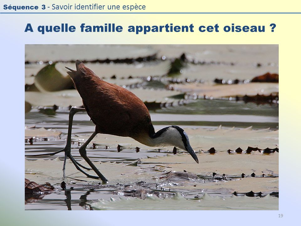 A quelle famille appartient cet oiseau