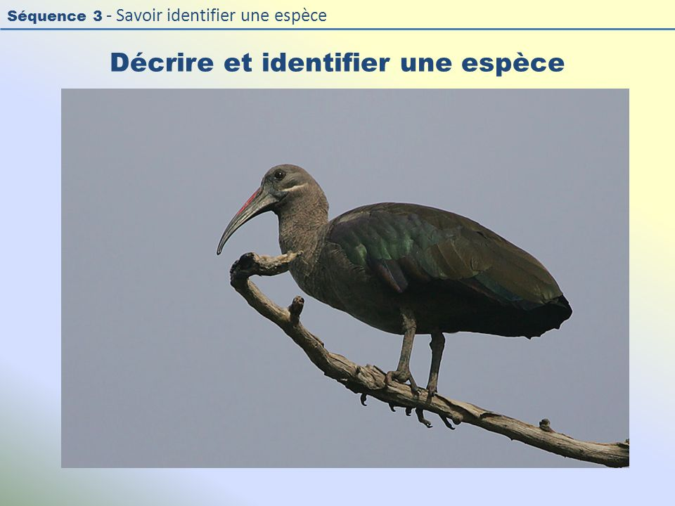 Décrire et identifier une espèce
