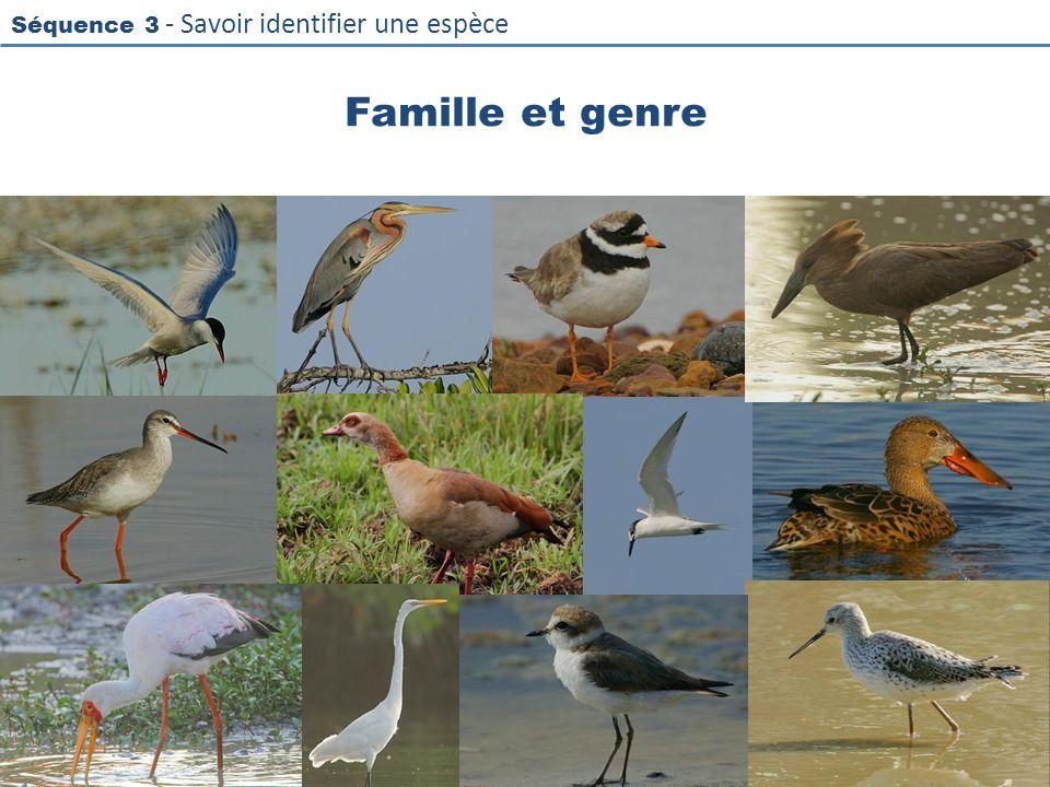 Famille et genre