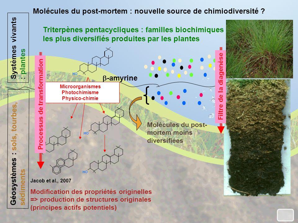 Molécules du post-mortem : nouvelle source de chimiodiversité