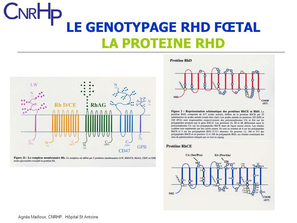 LE GENOTYPAGE RHD FŒTAL LA PROTEINE RHD