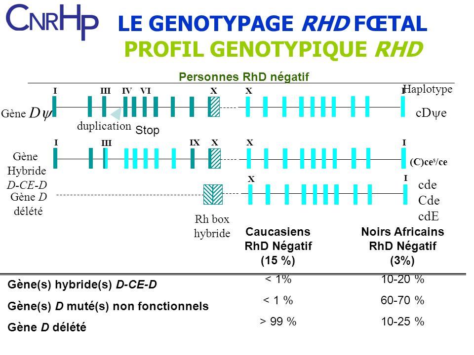 LE GENOTYPAGE RHD FŒTAL PROFIL GENOTYPIQUE RHD