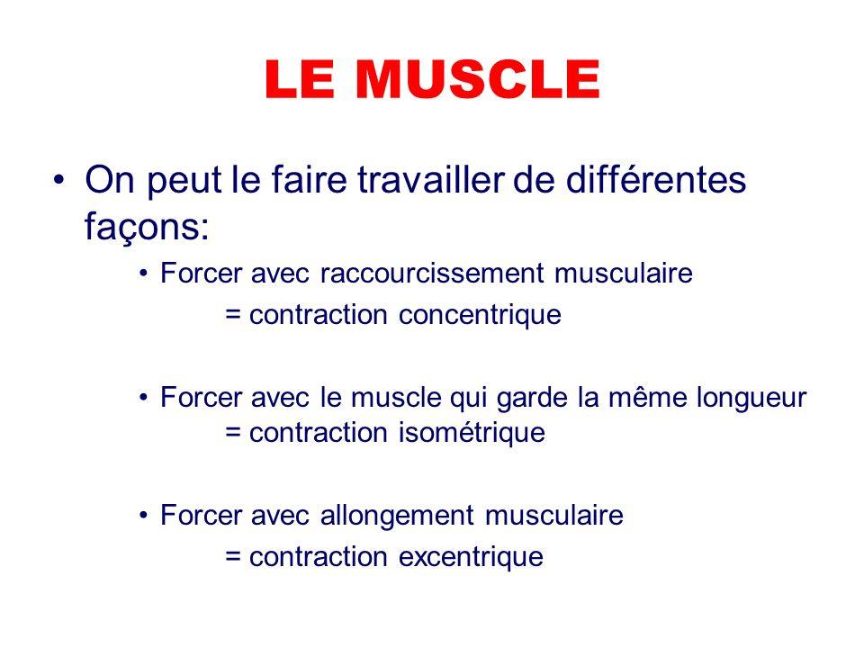 LE MUSCLE On peut le faire travailler de différentes façons: