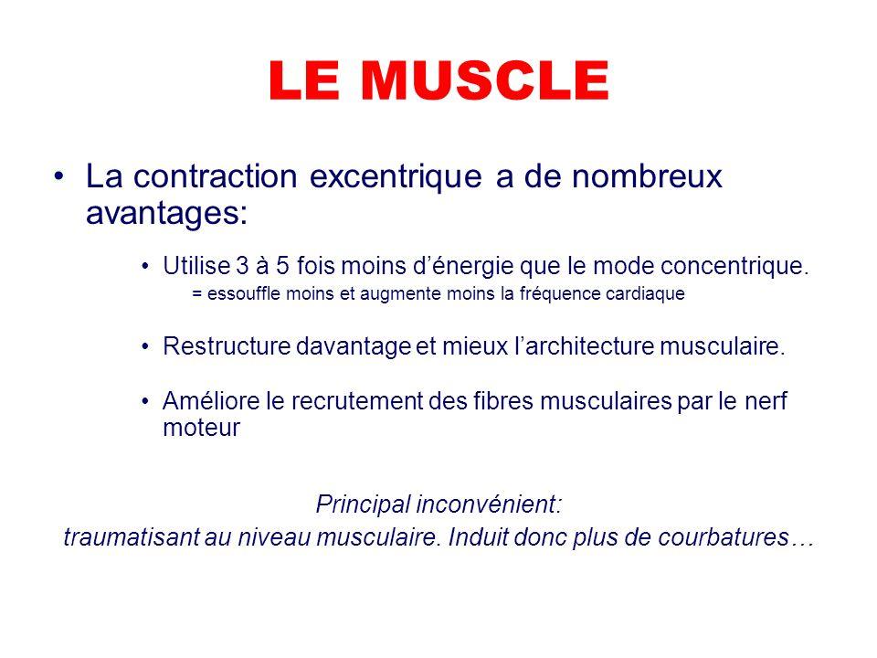 LE MUSCLE La contraction excentrique a de nombreux avantages: