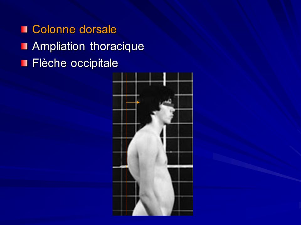 Colonne dorsale Ampliation thoracique Flèche occipitale