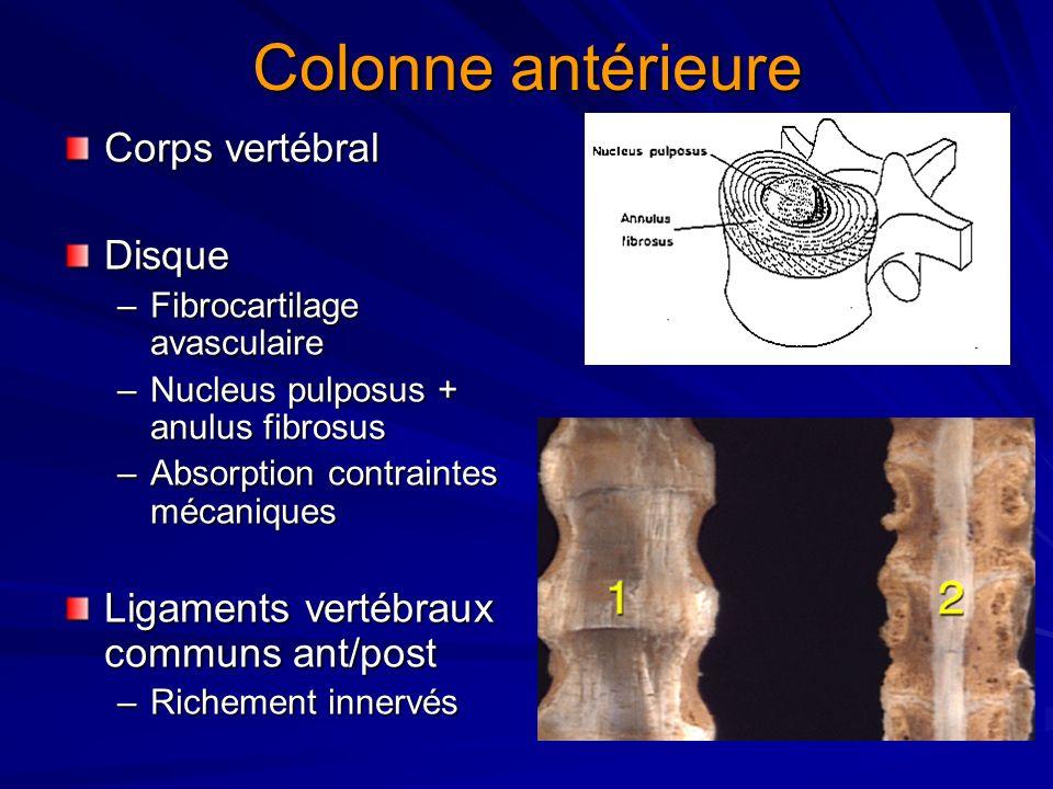 Colonne antérieure Corps vertébral Disque