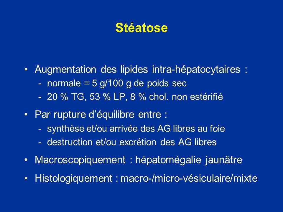 Stéatose Augmentation des lipides intra-hépatocytaires :