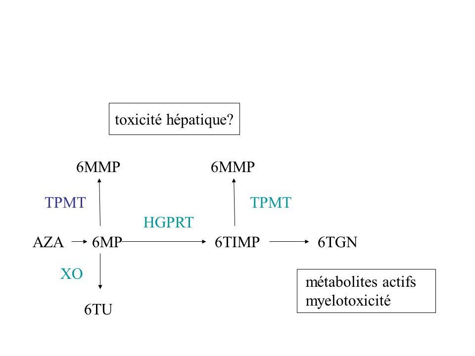toxicité hépatique 6MMP. 6MMP. TPMT. TPMT. HGPRT. AZA. 6MP. 6TIMP. 6TGN. XO. métabolites actifs.