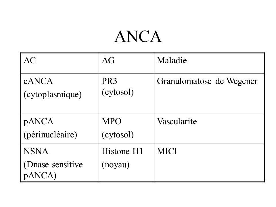 ANCA AC AG Maladie cANCA (cytoplasmique) PR3 (cytosol)