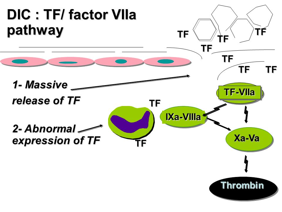 DIC : TF/ factor VIIa pathway 1- Massive release of TF