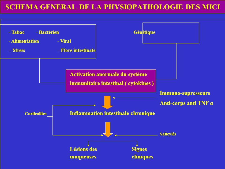 SCHEMA GENERAL DE LA PHYSIOPATHOLOGIE DES MICI