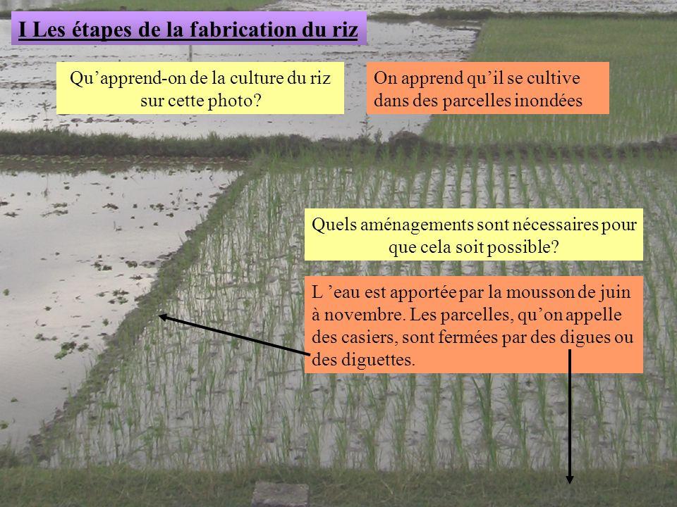 I Les étapes de la fabrication du riz