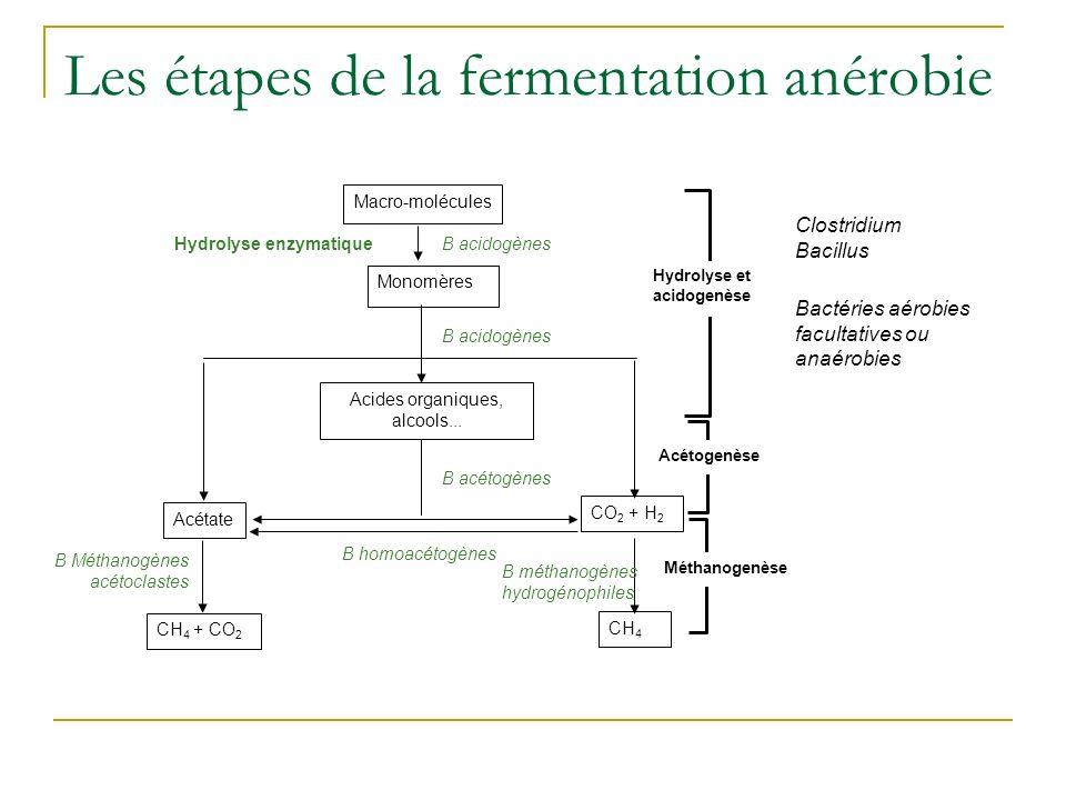 Les étapes de la fermentation anérobie