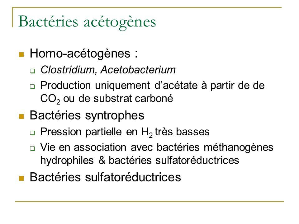 Bactéries acétogènes Homo-acétogènes : Bactéries syntrophes