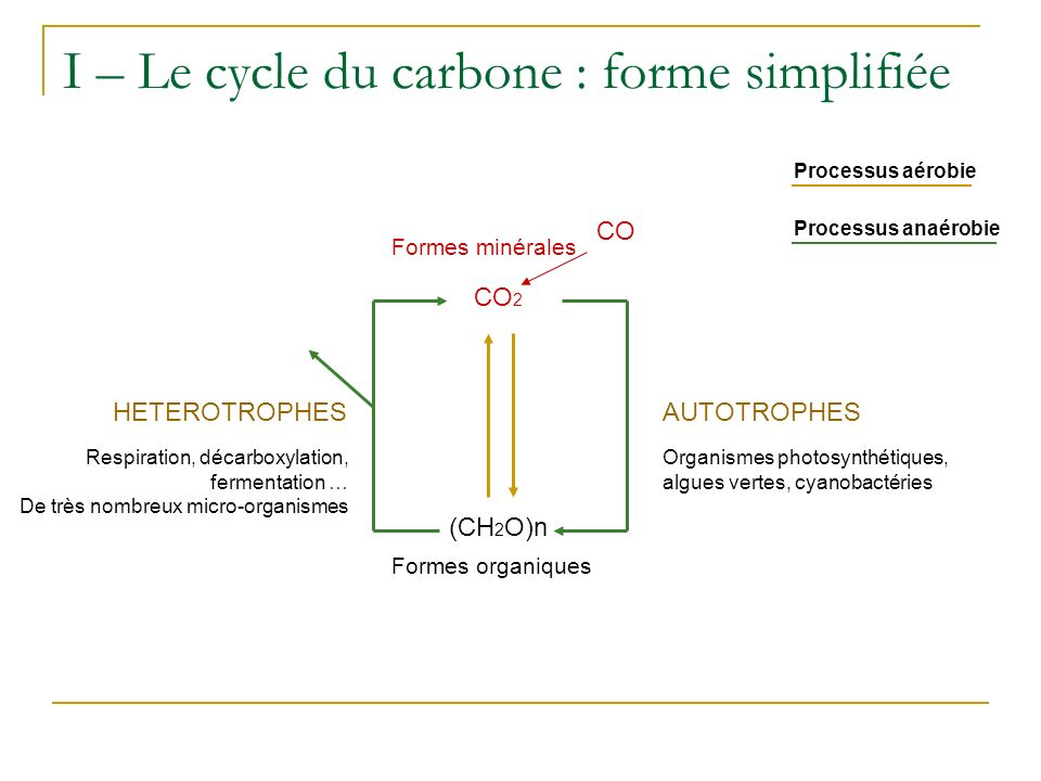 I – Le cycle du carbone : forme simplifiée