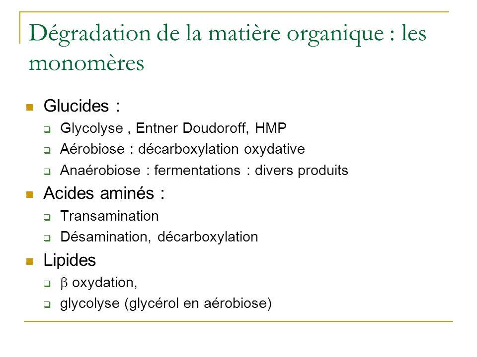 Dégradation de la matière organique : les monomères