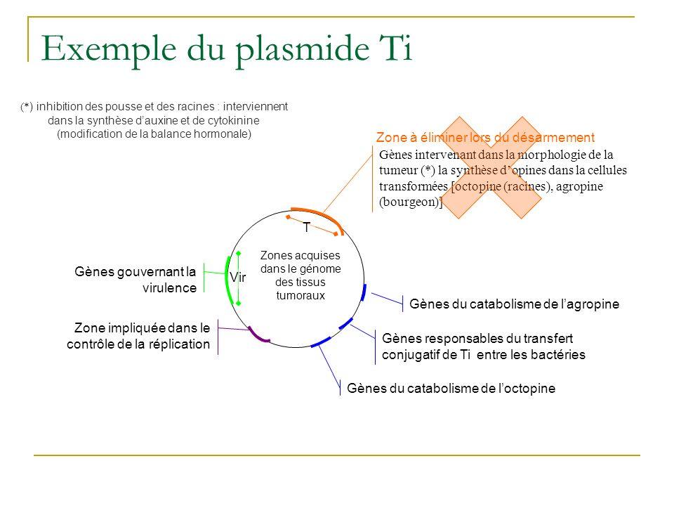 Exemple du plasmide Ti Zone à éliminer lors du désarmement