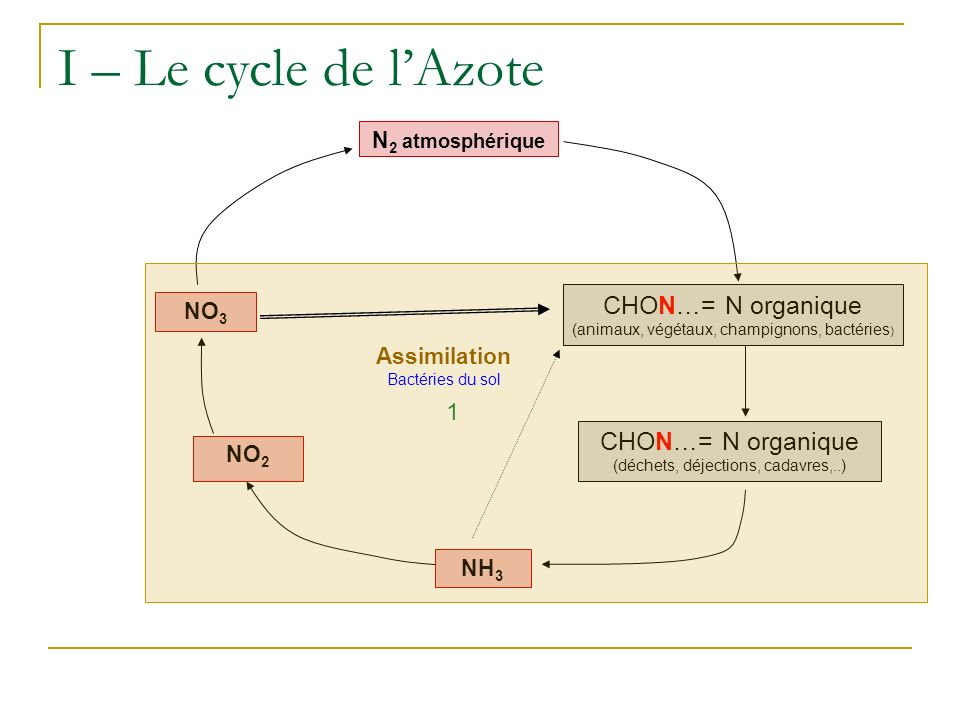 I – Le cycle de l'Azote CHON…= N organique CHON…= N organique 1