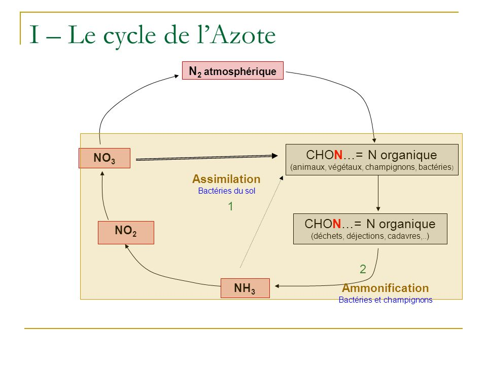 I – Le cycle de l'Azote CHON…= N organique CHON…= N organique 1 2