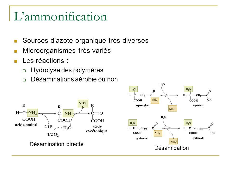 L'ammonification Sources d'azote organique très diverses