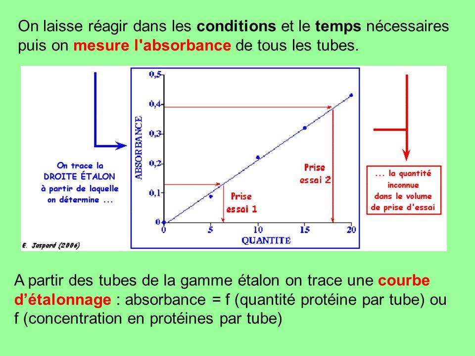 On laisse réagir dans les conditions et le temps nécessaires puis on mesure l absorbance de tous les tubes.