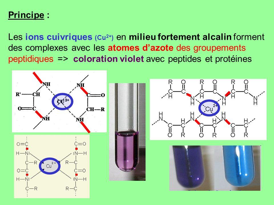Principe : Les ions cuivriques (Cu2+) en milieu fortement alcalin forment des complexes avec les atomes d'azote des groupements peptidiques => coloration violet avec peptides et protéines