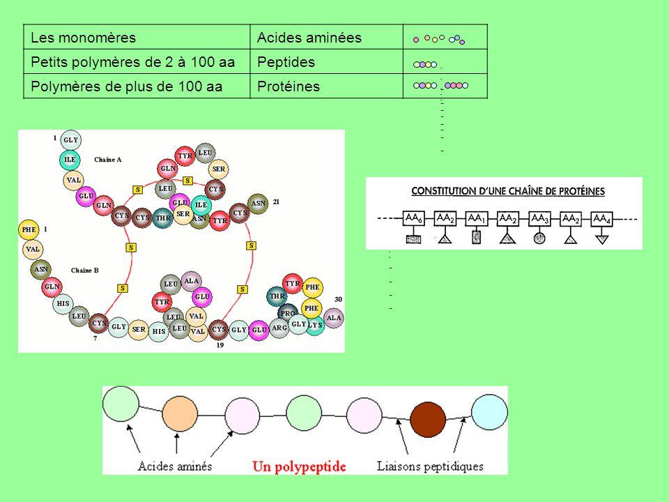 Petits polymères de 2 à 100 aa Peptides Polymères de plus de 100 aa