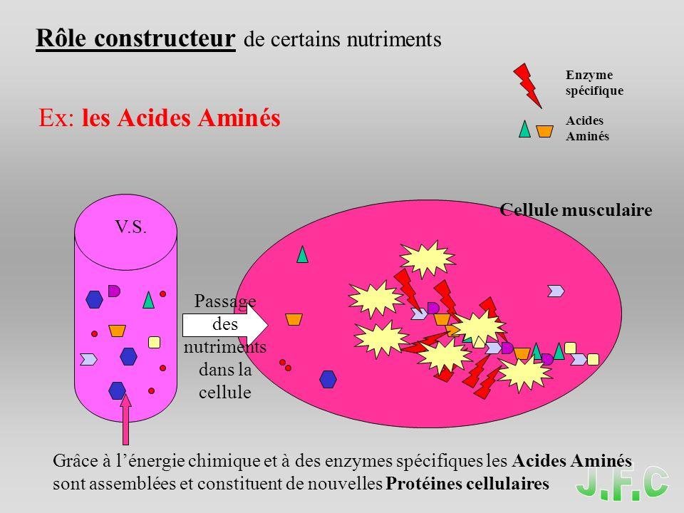 Passage des nutriments dans la cellule