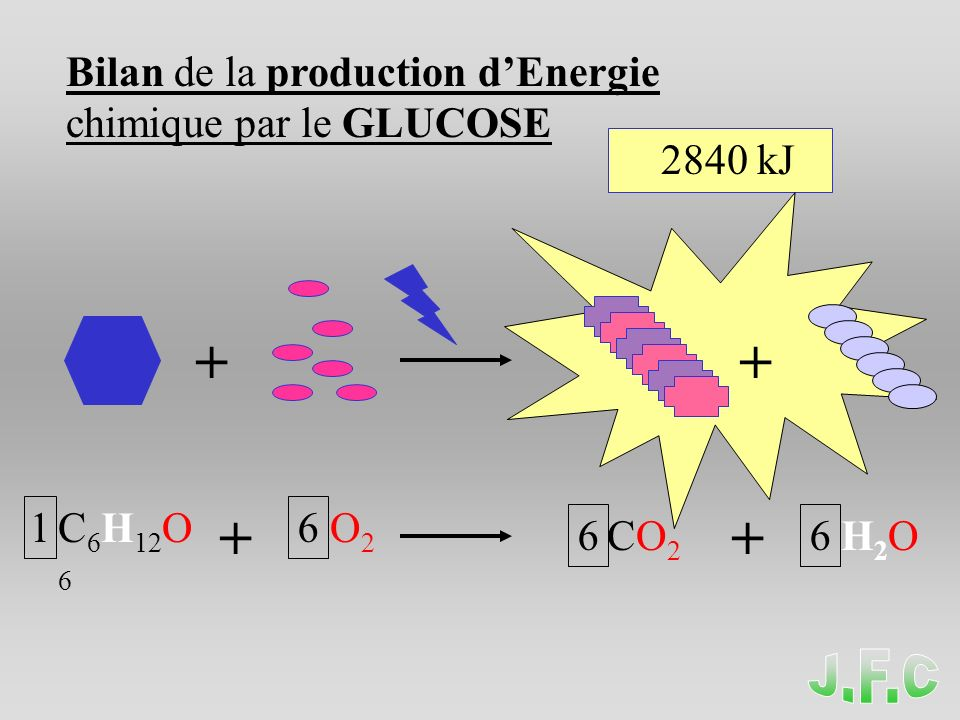 + + + + Bilan de la production d'Energie chimique par le GLUCOSE