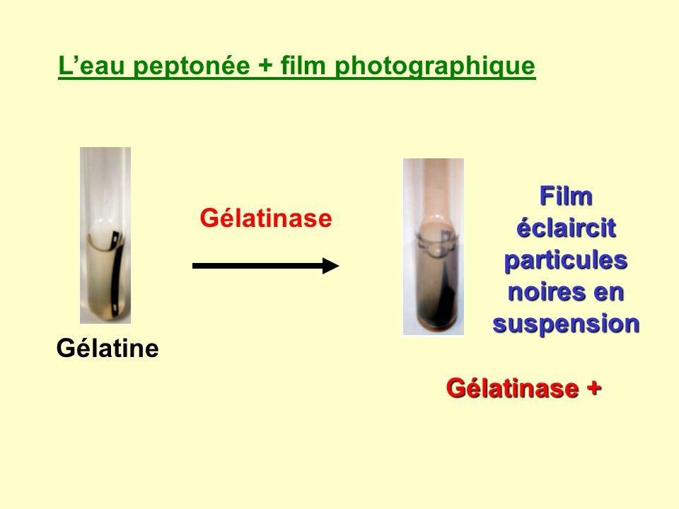 Film éclaircit particules noires en suspension
