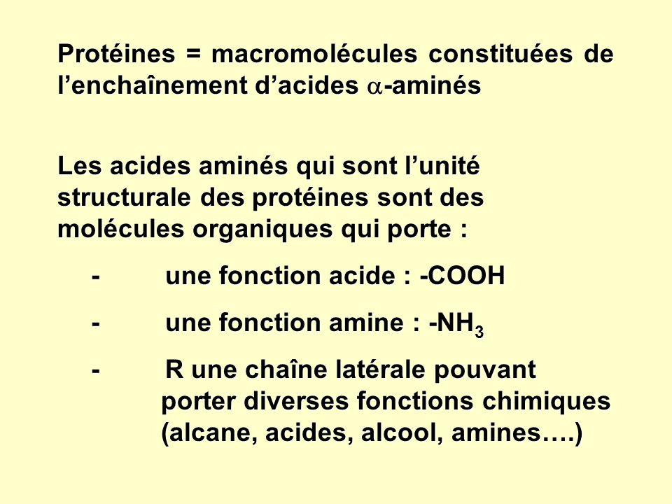 Protéines = macromolécules constituées de l'enchaînement d'acides -aminés