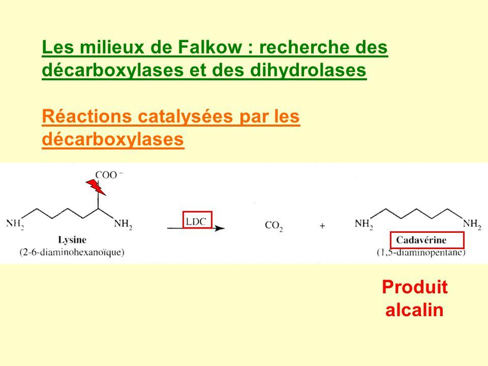 Les milieux de Falkow : recherche des décarboxylases et des dihydrolases