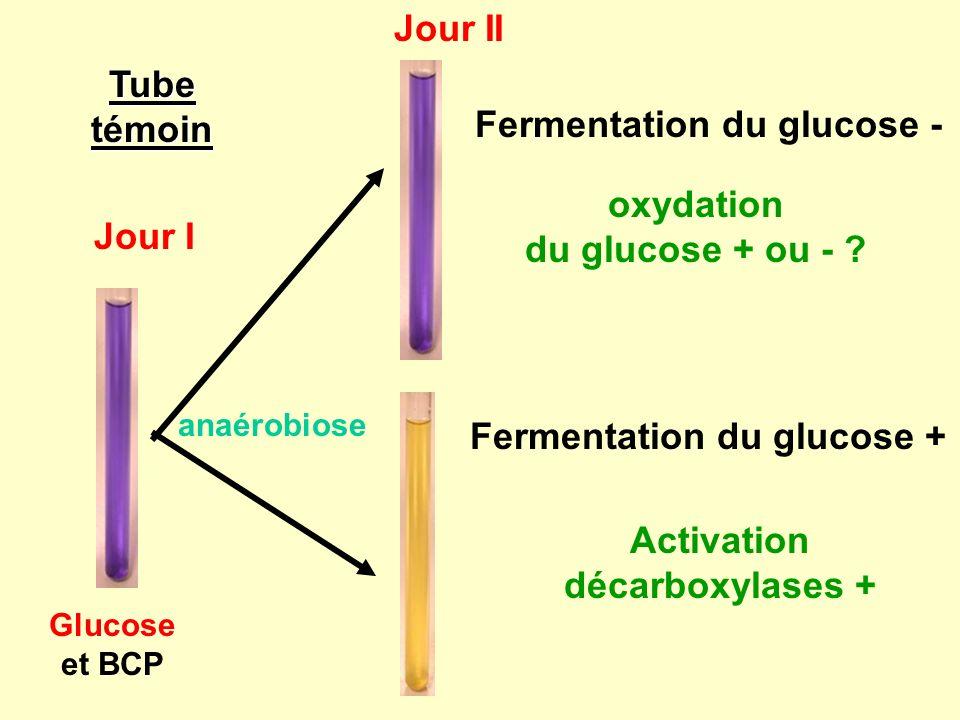 Fermentation du glucose -