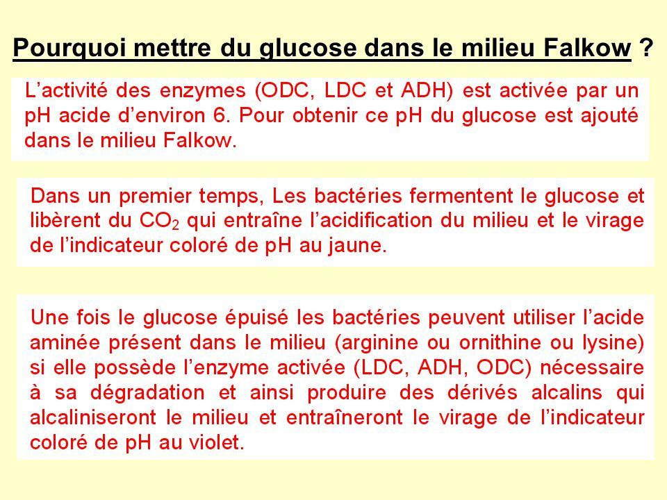 Pourquoi mettre du glucose dans le milieu Falkow