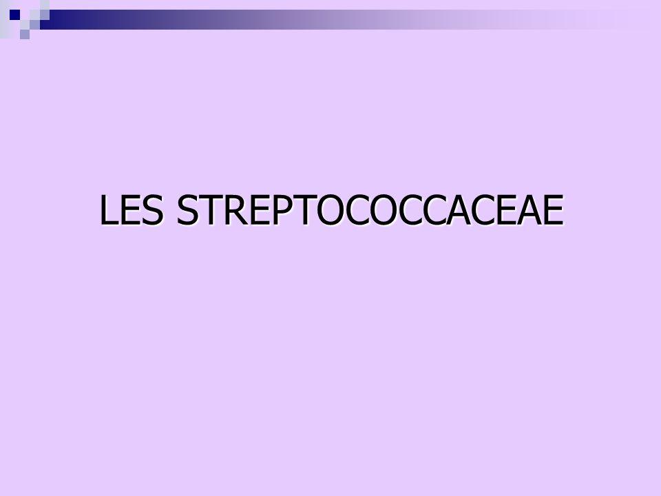 LES STREPTOCOCCACEAE